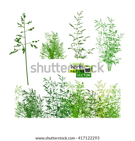 grass set. Vector - stock vector