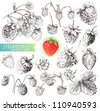 Great collection of hand drawn strawberries isolated on white background. - stock vector
