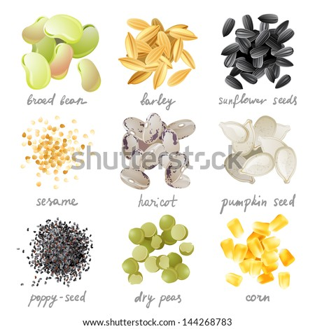 Great highly detailed set of grains, seeds and beans - stock vector