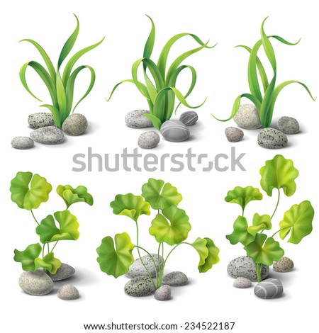 Green algae and stones set isolated on white. - stock vector