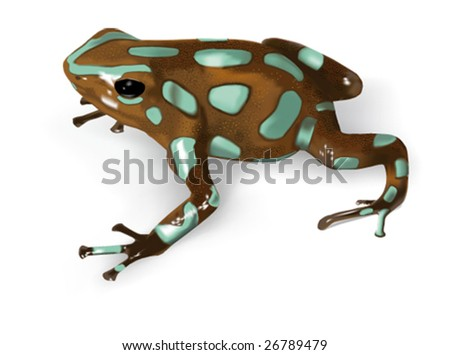 Green and Black Poison-Dart Frog (Dendrobates auratus) - vector illustration - stock vector