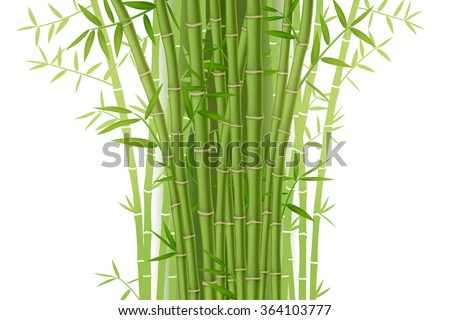 Green bamboo bush isolated on white background - stock vector