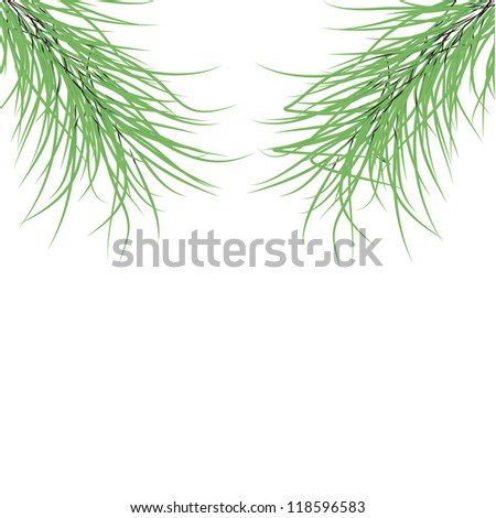 green fir branches on a white background.Vector - stock vector