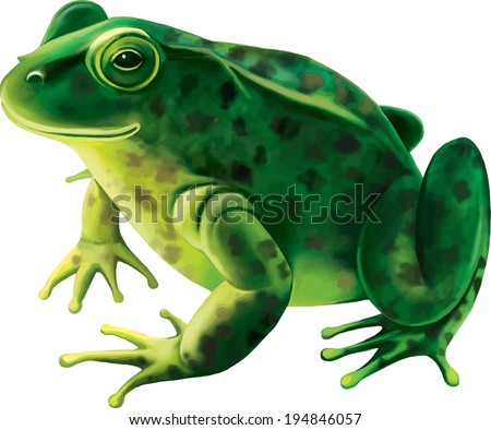 Green frog with spots, spotted toad, Isolated on white - stock vector