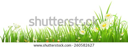 Green grass and flowers on white, vector illustration - stock vector