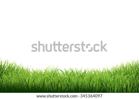 Green Grass Border, Vector Illustration - stock vector