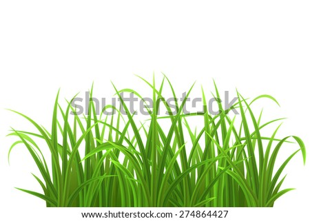 Green grass isolated on white, vector illustration - stock vector