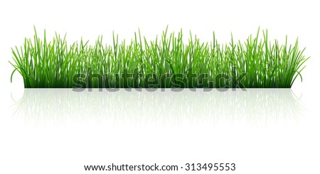 Green grass, Isolated with reflection on white background. Vector Illustration - stock vector