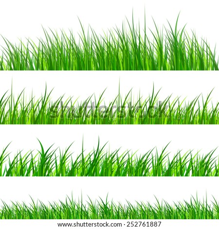 Green grass samples isolated, vector illustration. - stock vector