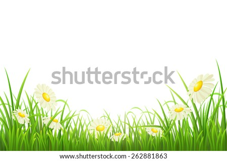 Green grass with daisies on white, vector illustration - stock vector