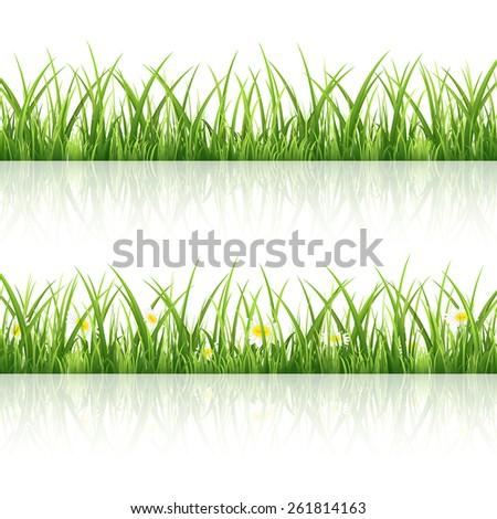 Green grass with flowers isolated on white background, illustration. - stock vector