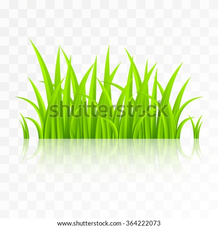 Green grass with reflection isolated on transparent background - stock vector