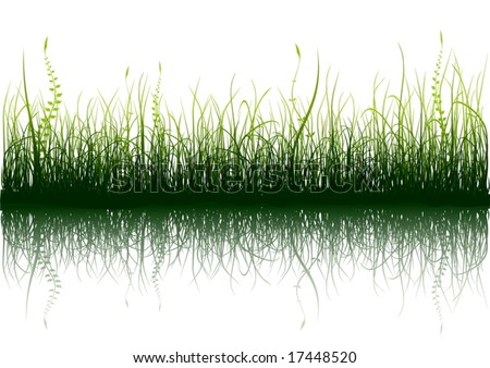 Green grass with reflection isolated on white - vector - stock vector