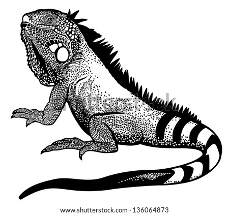 green iguana lizard black and white side view illustration - stock vector