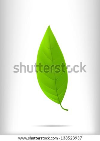 green leaf - stock vector