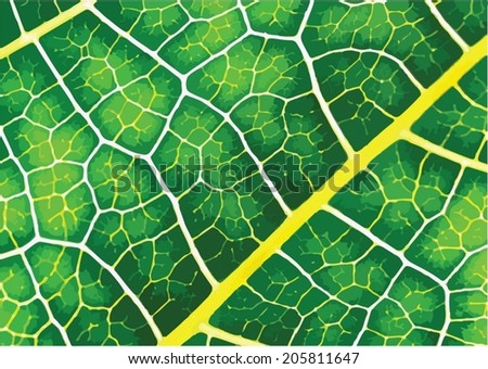Green leaf texture background - stock vector