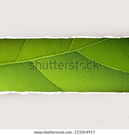 Green leaf texture under torn paper plates. Vector, EPS10 - stock vector