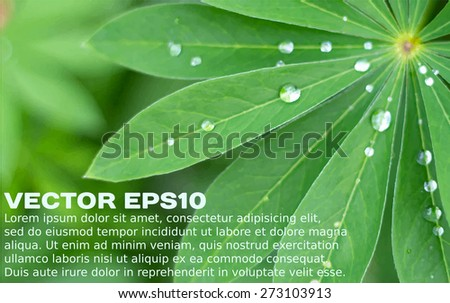 Green leaves and water drops realistic background with a placeholder. Vector illustration EPS10. - stock vector