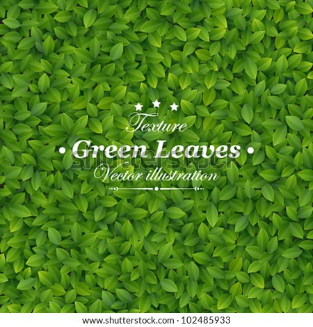 Green leaves texture. Vector illustration. - stock vector