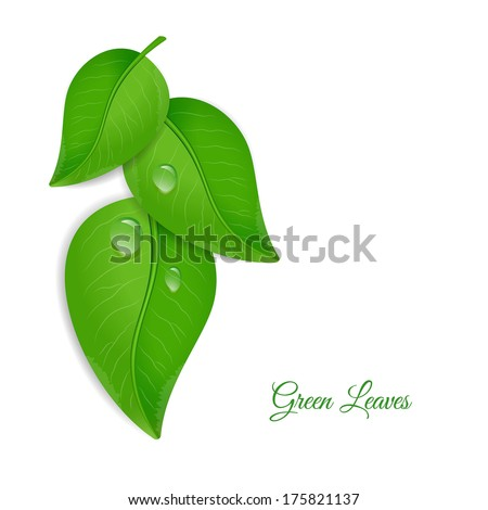 Green leaves with water drops - stock vector