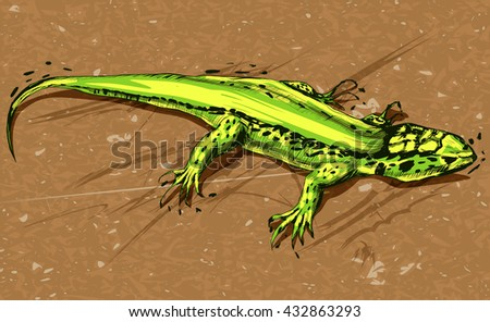 Green lizard, vector illustration on a background.  - stock vector