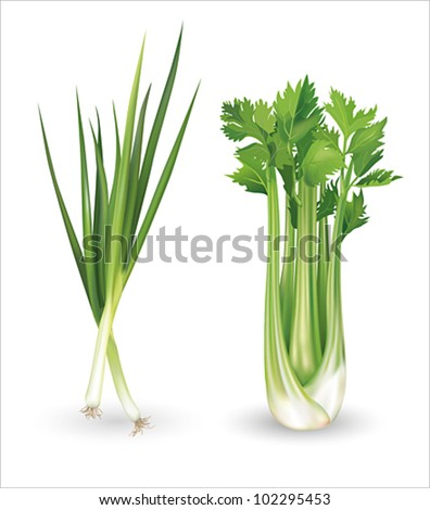 Green onion and celery. Vector illustration. - stock vector