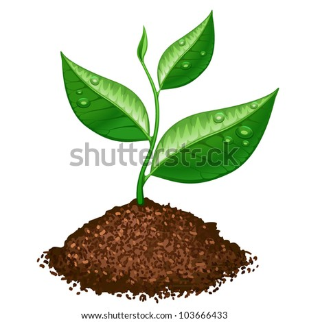 green plant - stock vector