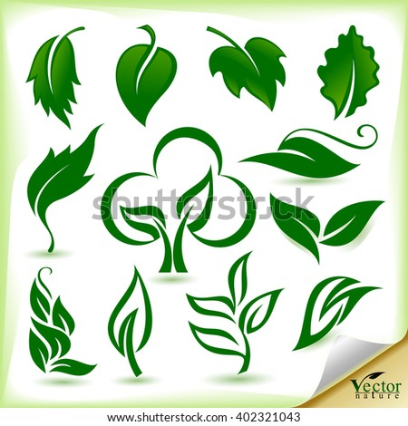 Green Silhouette of leaves  - stock vector