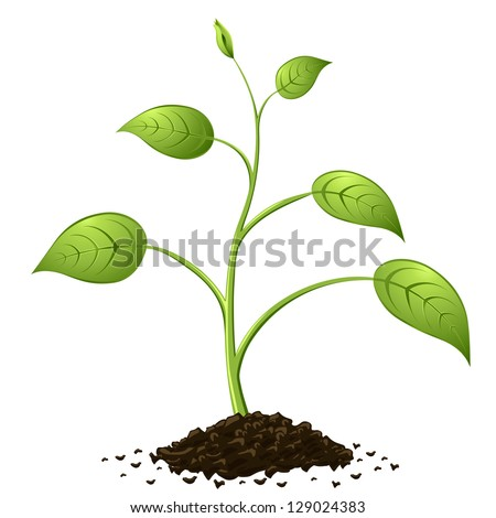Green spring growing from heap of soil isolated on white background. - stock vector
