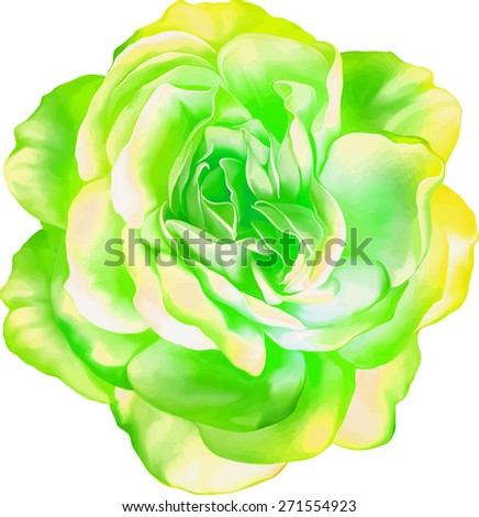 Green Yellow Sexy and beautiful and rose bud isolated on white background. Vector illustration - stock vector