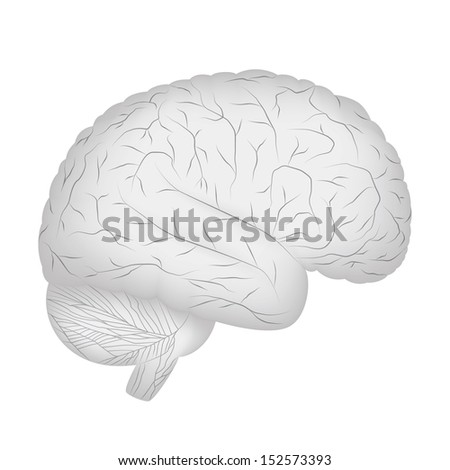 Grey human brain isolated on white background. Vector EPS10. - stock vector