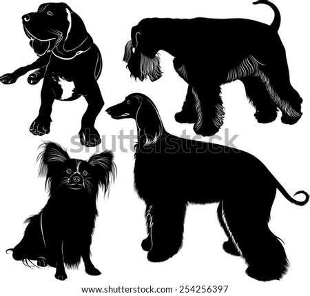 greyhound mastiff Miniature Schnauzer chihuahua - stock vector