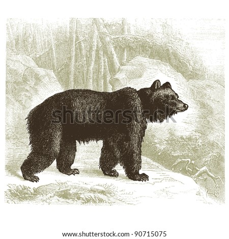 """Grizzly bears - vintage engraved illustration - """"Cent récits d'histoire naturelle"""" by C.Delon published in 1889 France - stock vector"""