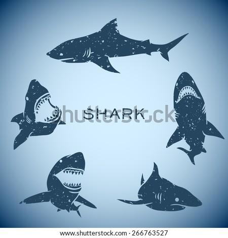 group of sharks concept background. Vector illustration - stock vector