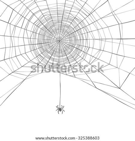 Halloween background. Spider web. Vector illustration - stock vector