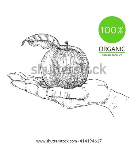 Hand, apple, eco food - stock vector
