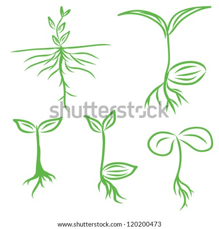 Hand draw Sprouts plants seeding - stock vector