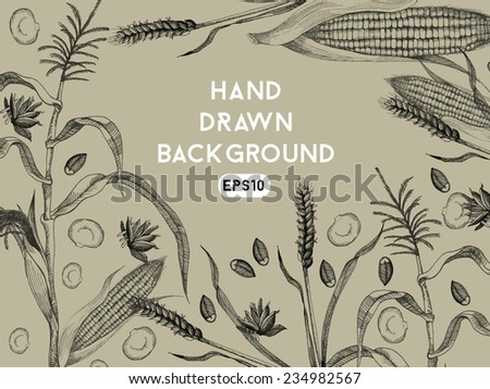 Hand drawing background with wheat and corn - stock vector