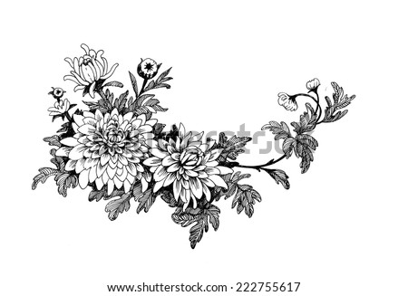 Hand drawing chrysanthemum flower vector illustration - stock vector