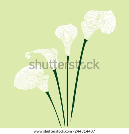Hand-drawing floral background with flower calla. Element for design. Vector illustration. - stock vector