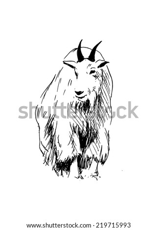of a mountain goat  Rocky Mountain Goat Clip Art