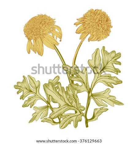 Hand drawing realistic vintage  garden 