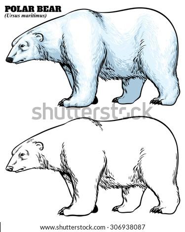 Hand drawing style of polar bear - stock vector