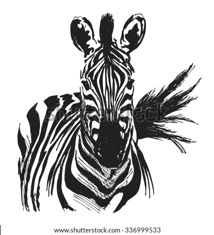 hand drawing zebra - stock vector