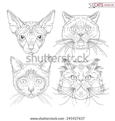 hand drawn animal set of cats - stock vector