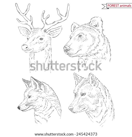 hand drawn animal set of forest animals - stock vector