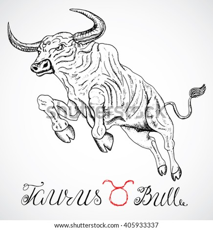 Hand drawn astrological zodiac sign Bull or Taurus. Line art vector illustration of engraved horoscope symbol. Jumping ox, traditional style. Doodle drawing and sketch with calligraphic lettering - stock vector