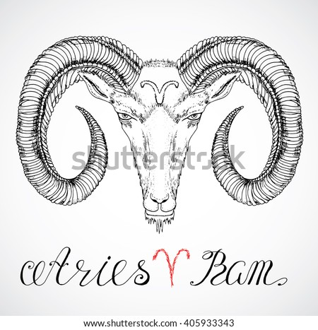 Hand drawn astrological zodiac sign Ram or Aries. Line art vector illustration of engraved horoscope symbol. Head with horns, traditional style. Doodle drawing and sketch with calligraphic lettering - stock vector