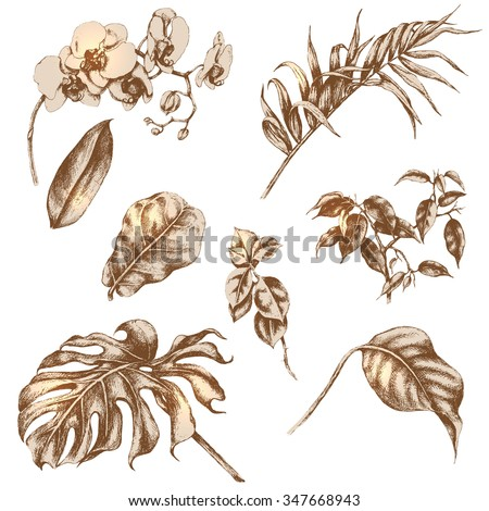 Hand drawn branches and leaves of tropical plants.  - stock vector