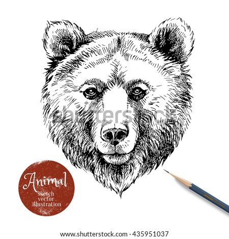 Hand drawn brown bear animal vector illustration. Sketch isolated bear portrait on white background with pencil and label banner - stock vector